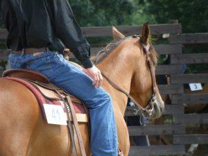 horse-444017_1920