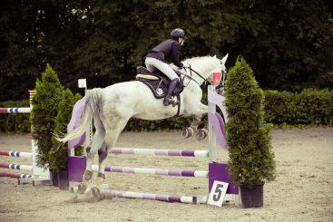 show-jumping-594156_1920