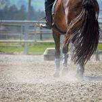 #5075 RISE & SHINE ONLINE HORSE SHOW